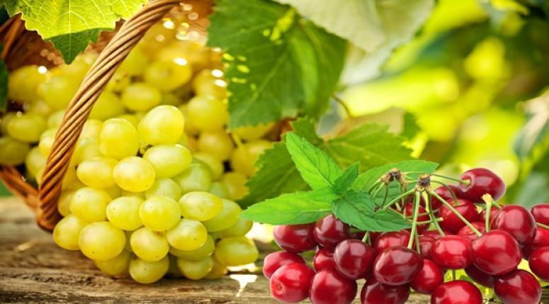 Yaş meyve sebze ve mamulleri ihracatında Kasım ayında tarihi rekor