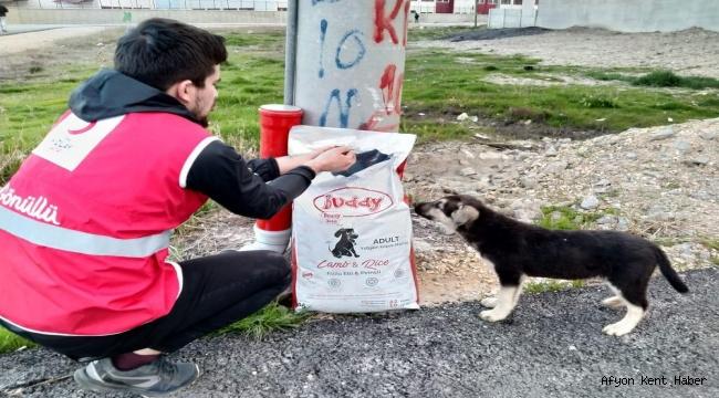 Genç Kızılay Sokak Hayvanlarını Unutmadı