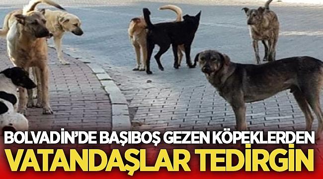Bolvadin'de başıboş köpekler vatandaşları tedirgin ediyor