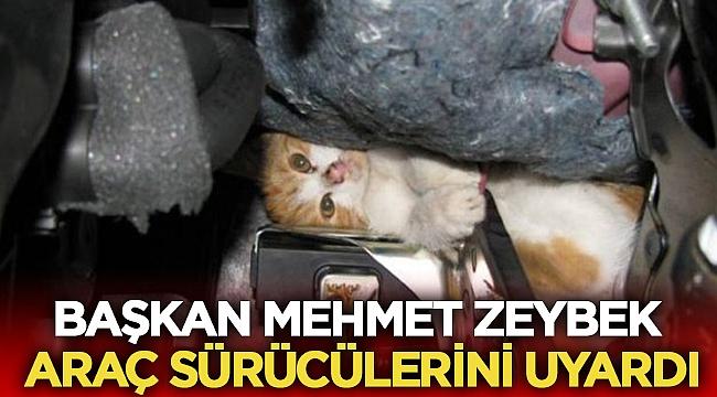Zeybek, Sevimli dostlarımıza lütfen dikkat edin!