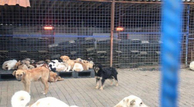 Aydın Belediyesi sokak hayvanlarını unutmuyor