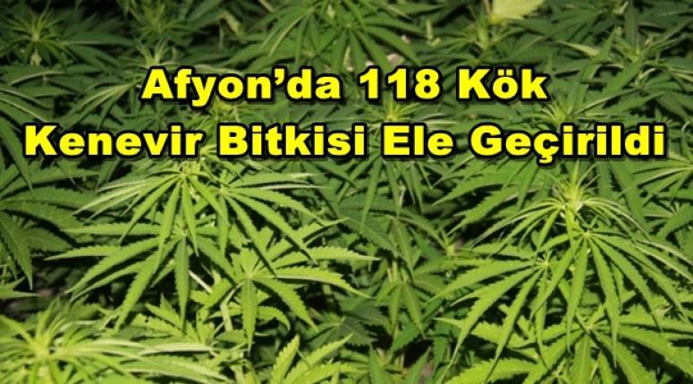 Afyon'da 118 Kök Kenevir Bitkisi Ele Geçirildi