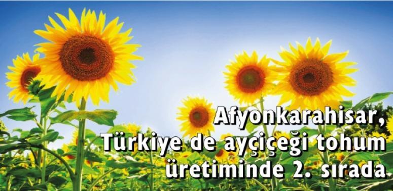 Afyon, Türkiye de ayçiçeği tohum üretiminde 2. sırada