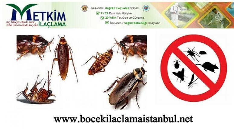 Böcek İlaçlama Şirketi Seçerken Dikkat Edilmesi Gerekenler