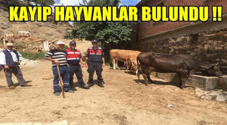 Afyon'da kayıp hayvanlar sahibine teslim edildi !!