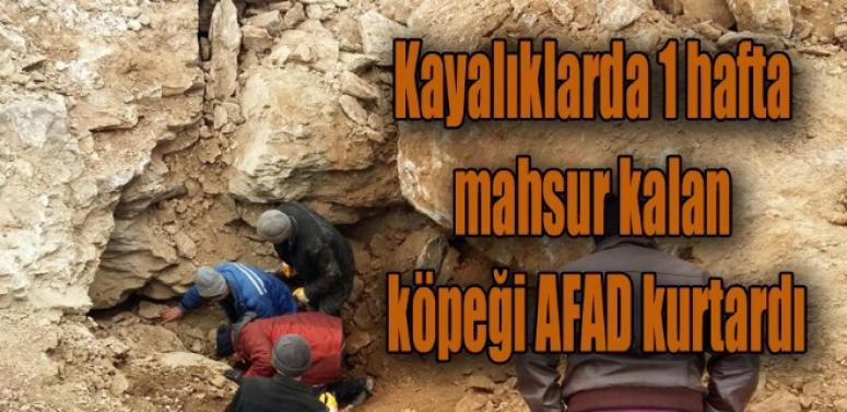 Kayalıklarda 1 hafta mahsur kalan köpeği AFAD kurtardı