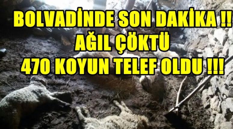 BOLVADİNDE SON DAKİKA !! AĞIL ÇÖKTÜ , 470 KOYUN TELEF OLDU !!!